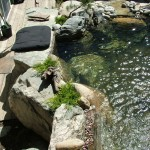 Turfcare Landscaping Sandpoint Water Feature (10)