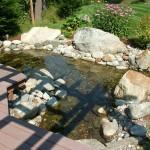 Backyard Pond (1)