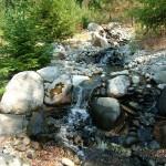Backyard Pond (6)
